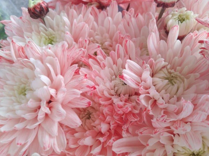Mooie de Lentebloemen die onder de Zon, Verschillende Types bloeien van Bloemen royalty-vrije stock foto