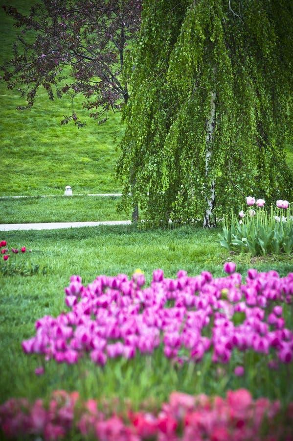 Mooie de lentetuin stock afbeeldingen