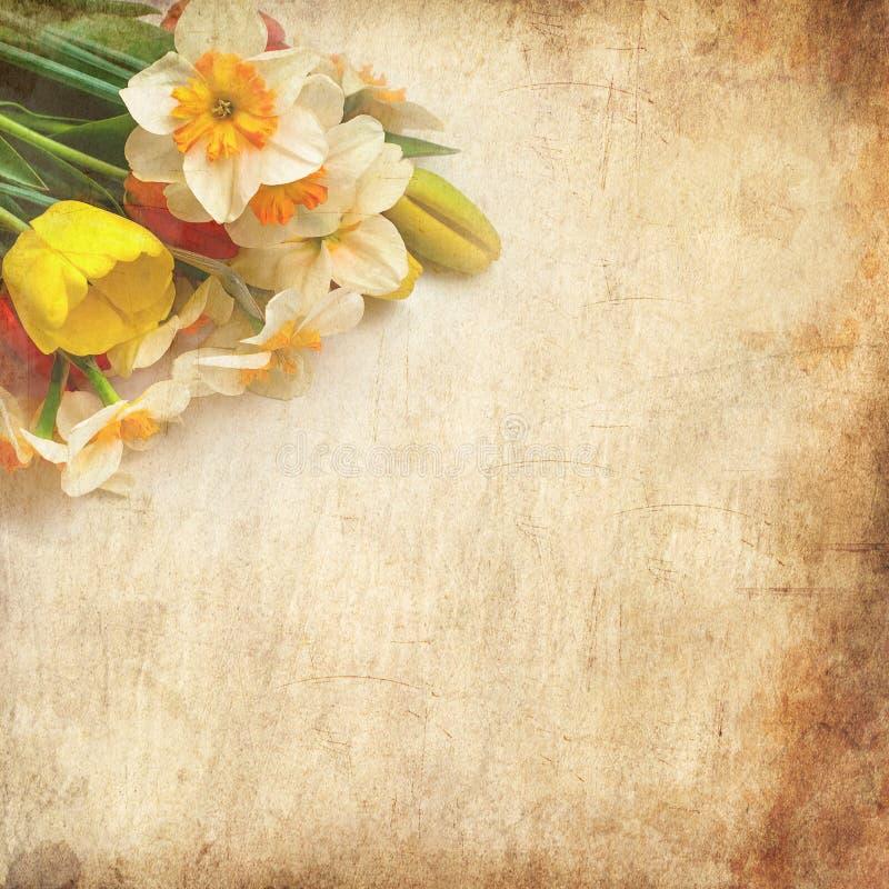 Mooie de lentetulpen en gele narcissen stock afbeelding