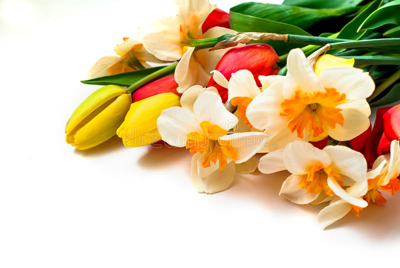Mooie de lentetulpen en gele narcissen stock afbeeldingen