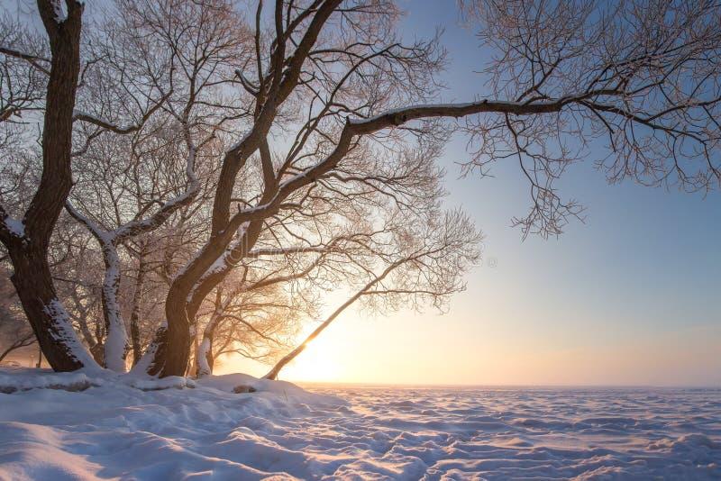Mooie de winteraard in de duidelijke avond Sneeuwboom op ijzige rivier Het toneel Landschap van de Winter De verbazende Achtergro stock fotografie