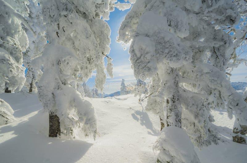 Mooie de winterochtend stock afbeeldingen