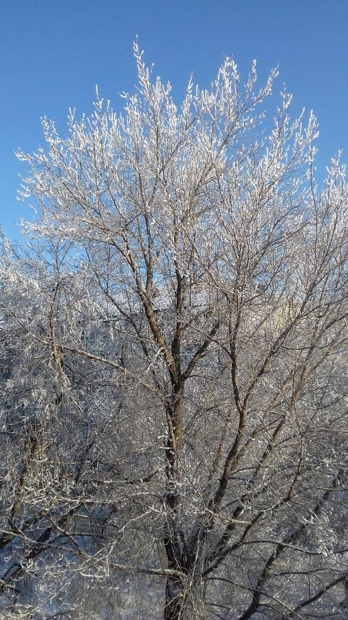 Mooie de winterochtend Bomen in sneeuw De mooie hemel royalty-vrije stock foto