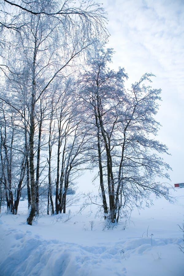 Mooie de winterscène stock foto's
