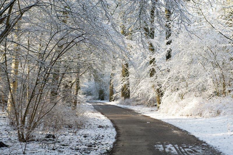 De steeg die van de winter tussen bomen lopen die met sneeuw worden behandeld stock afbeelding