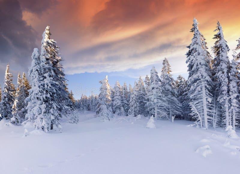 Mooie de winterzonsopgang in de bergen stock fotografie