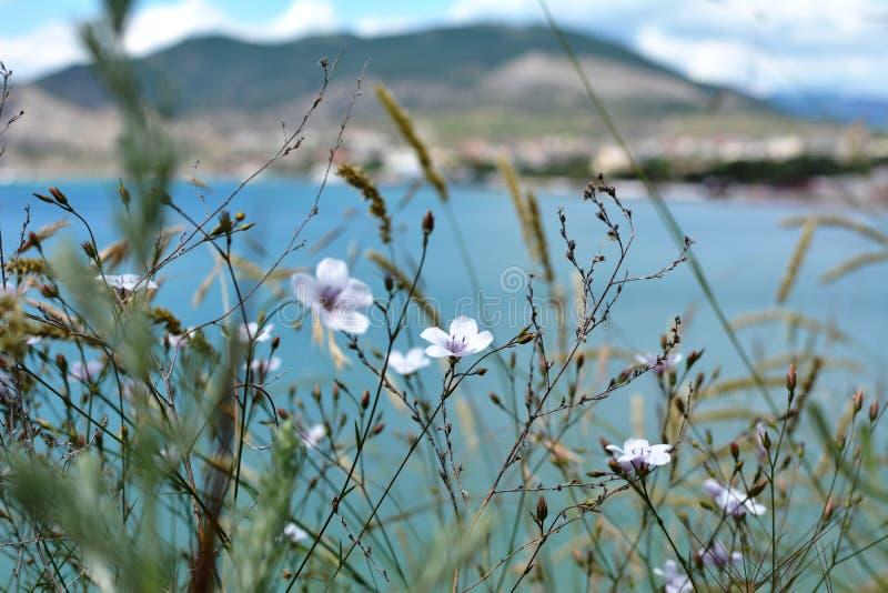 Mooie de zomerbloemen De installaties en de bergen zijn de schoonheid van aard royalty-vrije stock foto