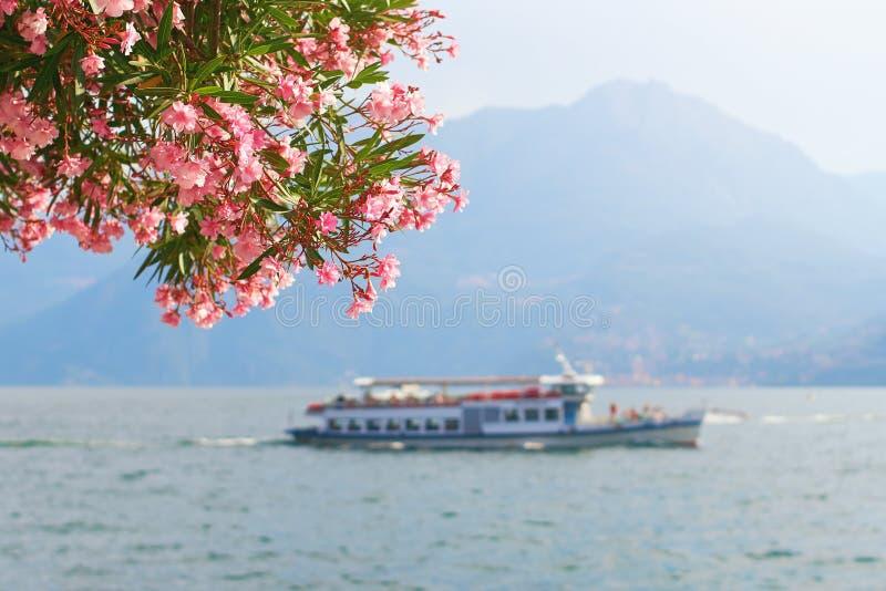 Mooie de zomermening van een toeristenschip die over de Bellagio stad bij meer Como in Italië met bloeiende nerium varen royalty-vrije stock foto
