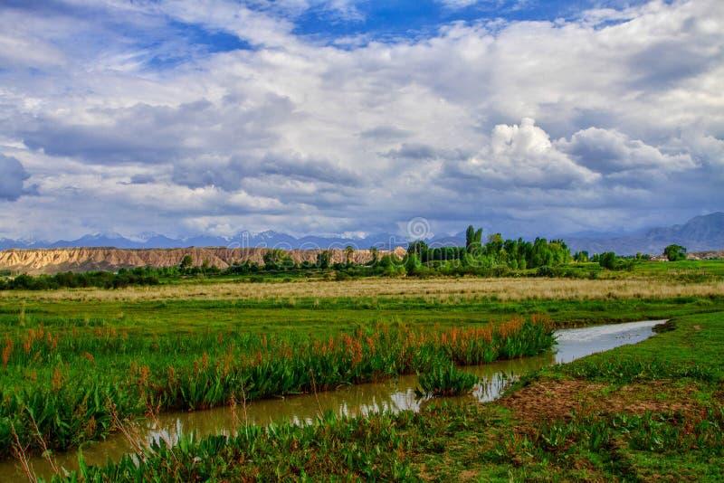 Mooie de zomerweide met groen gras en lage wolken stock afbeeldingen