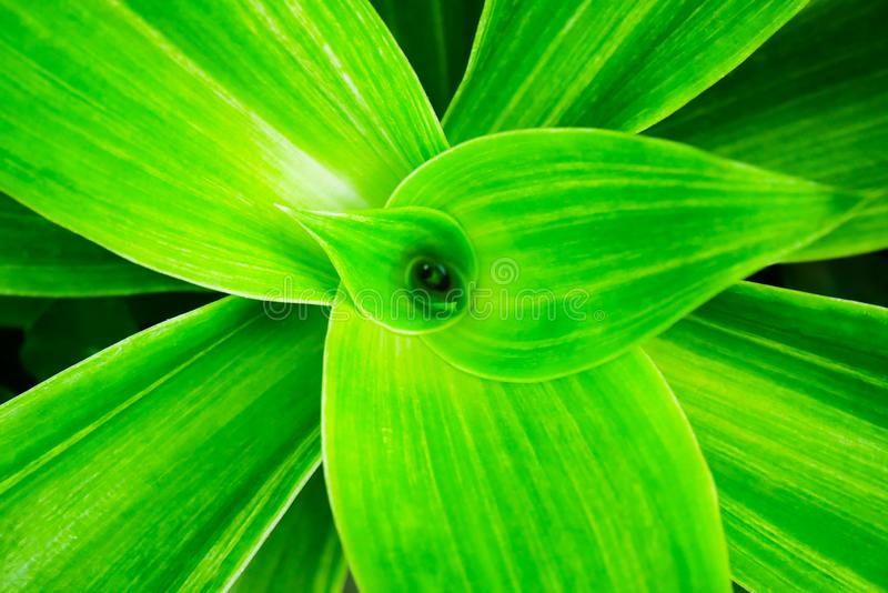 Mooie dichte omhooggaand van natuurlijke groene bladeren denkt met het zonlicht in tropisch bos na dat als natuurlijk of vers stock foto