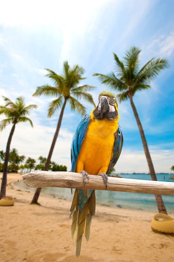 Mooie die ara op houten door het strand wordt neergestreken royalty-vrije stock fotografie
