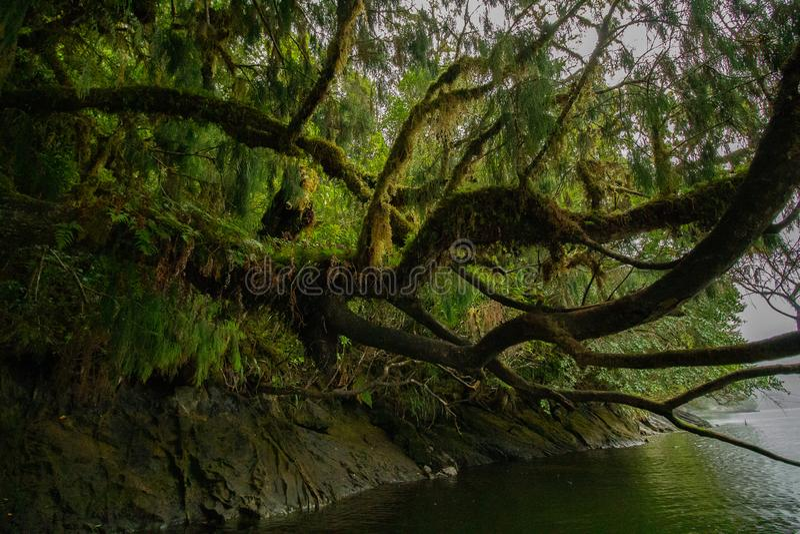 Mooie die boom in mos het hangen over water wordt behandeld royalty-vrije stock afbeeldingen