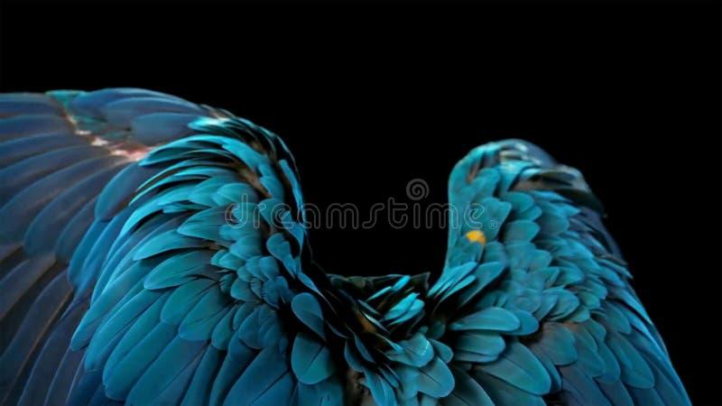 Mooie die de vogelpapegaai van de macorepapegaai op donkere achtergrond wordt geïsoleerd royalty-vrije stock fotografie