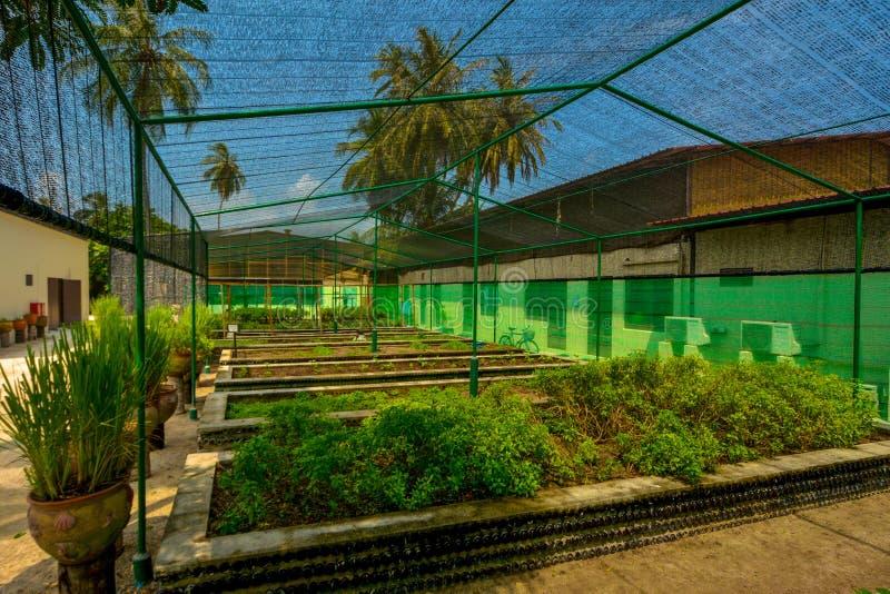 Mooie die kruidtuin bij de tropische toevlucht wordt gevestigd royalty-vrije stock foto's