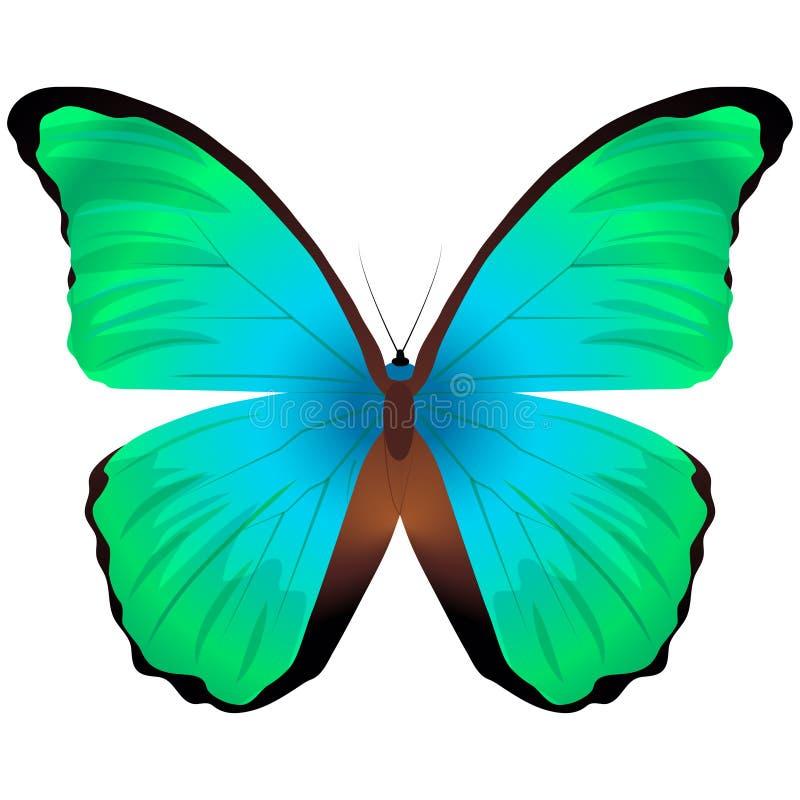 Mooie die vlinder op een witte achtergrond wordt ge?soleerd Grote oranje uiteinde glaucippe vlinder royalty-vrije illustratie