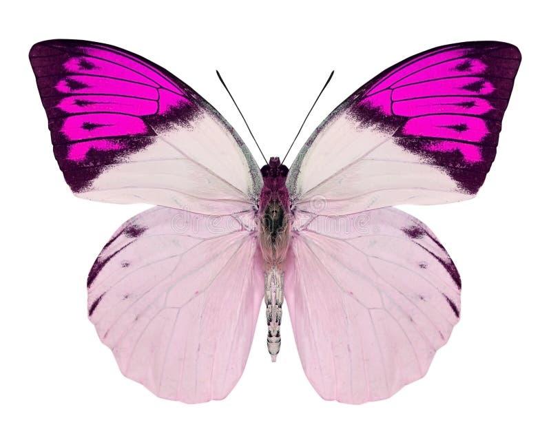 Mooie die vlinder op wit wordt geïsoleerd stock fotografie