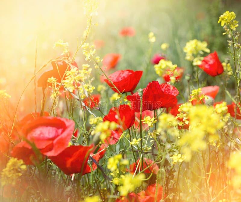 Mooie die weidebloemen door zonlicht worden aangestoken royalty-vrije stock foto's