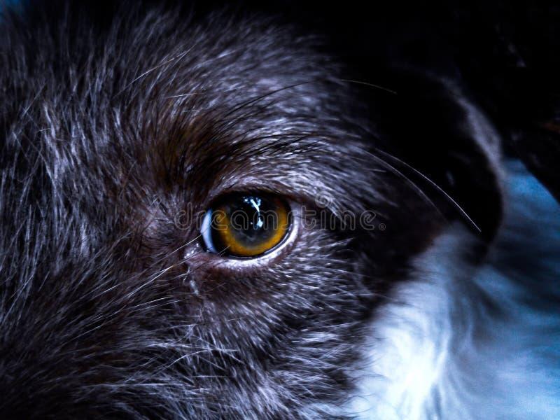 Mooie dog& x27; s oog stock afbeelding