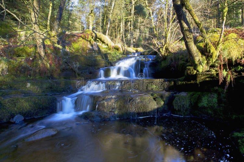 Mooie draperende waterval, Nant Bwrefwy, Bos blaen-y-Glyn stock fotografie