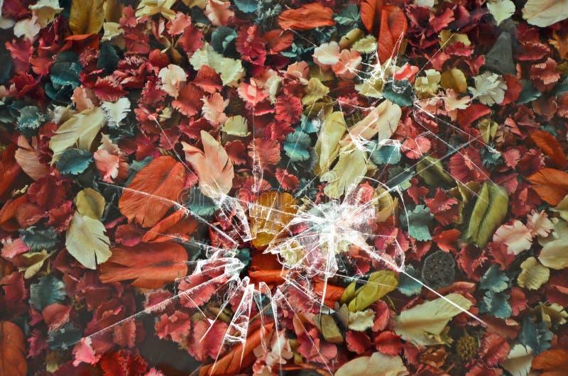 Mooie droge gekleurde vruchten en bladeren onder gebroken glas stock foto's