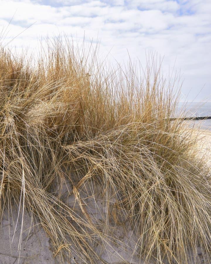 Mooie duinen op het strand van de Oostzee stock foto's