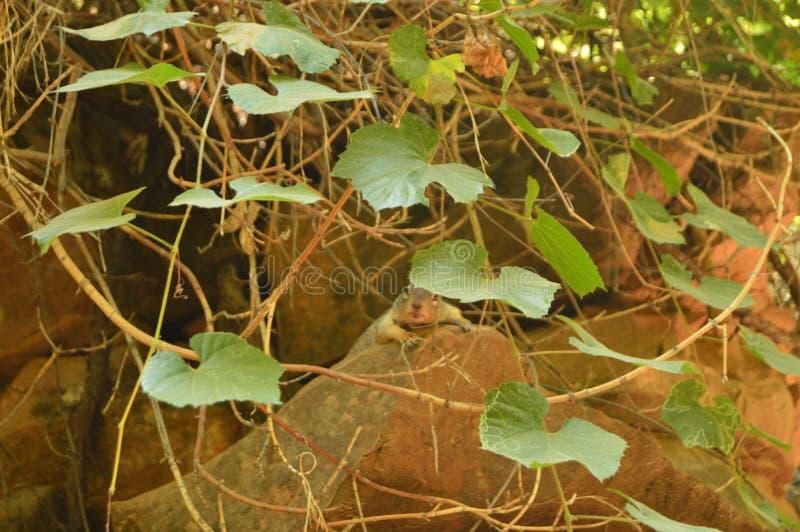Mooie Eekhoorn in Zion Park De Vakantie van de de geologiereis royalty-vrije stock afbeeldingen