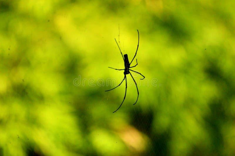 Mooie Eenzame Zwarte Kleine Spin stock foto