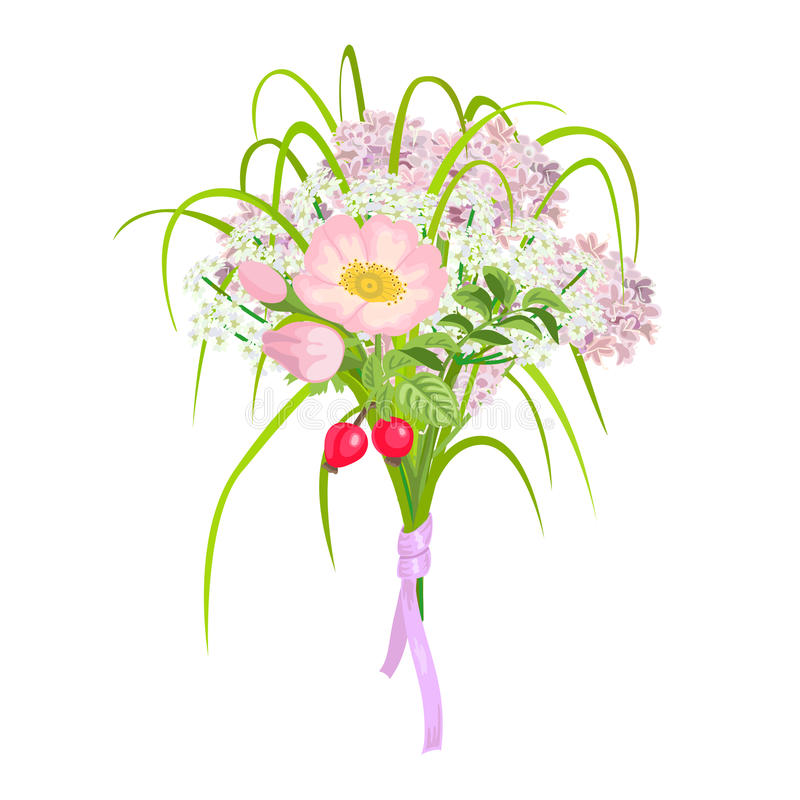 Mooie en elegante Roze die Bloemen op witte achtergrond worden geïsoleerd royalty-vrije illustratie