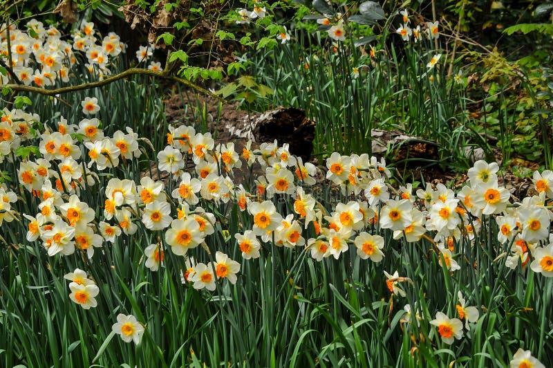 Mooie en gekleurde tuin royalty-vrije stock fotografie