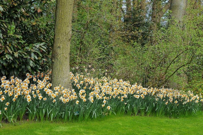Mooie en gekleurde tuin royalty-vrije stock foto