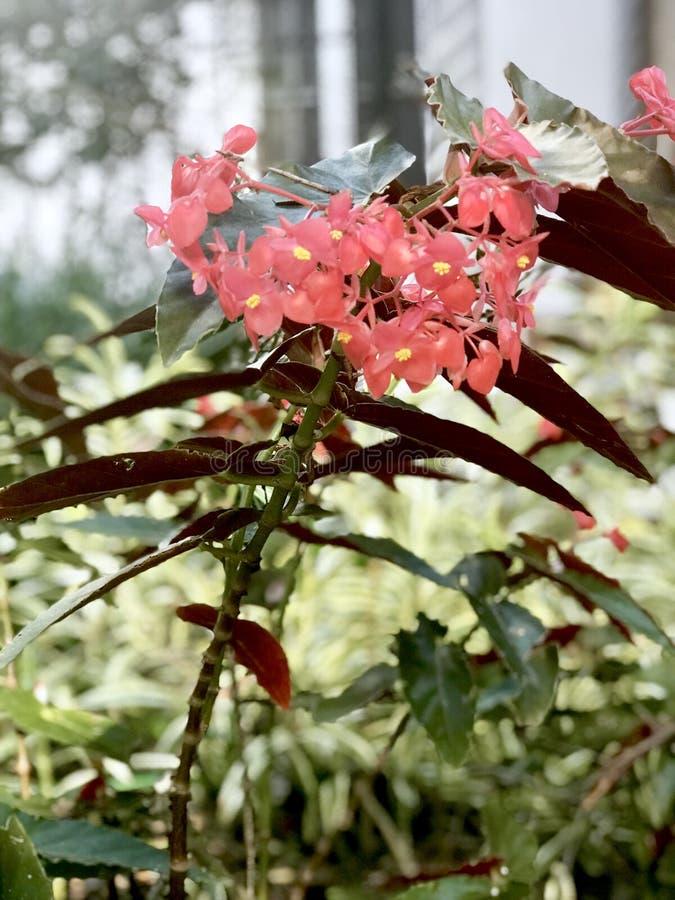 Mooie en gevoelige bloemen in een boeket van vele kleuren van hen donkergroen lichtengebladerte overal royalty-vrije stock afbeeldingen