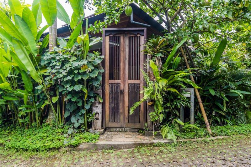 Mooie en groene tropische bali-tuin stock afbeeldingen