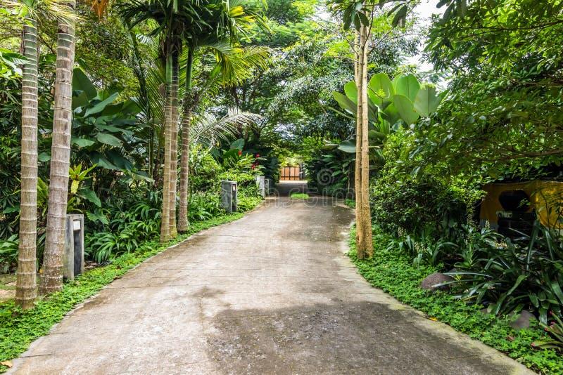 Mooie en groene tropische bali-tuin royalty-vrije stock afbeeldingen