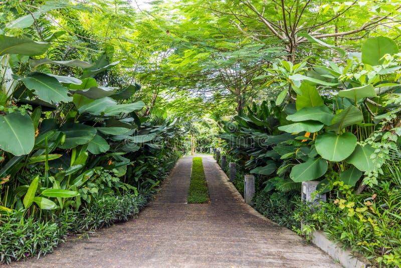 Mooie en groene tropische bali-tuin stock foto's