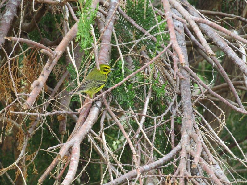 Mooie en Kleurrijke Vogel royalty-vrije stock foto's