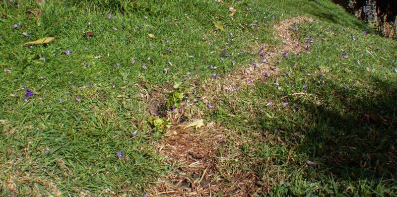 Mooie en natuurlijke kleine kruiden in stadscolonia tovar Venezuela stock afbeelding