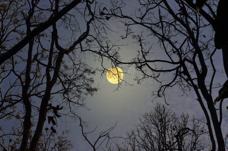Mooie en romantische volle maan in het bos stock afbeeldingen