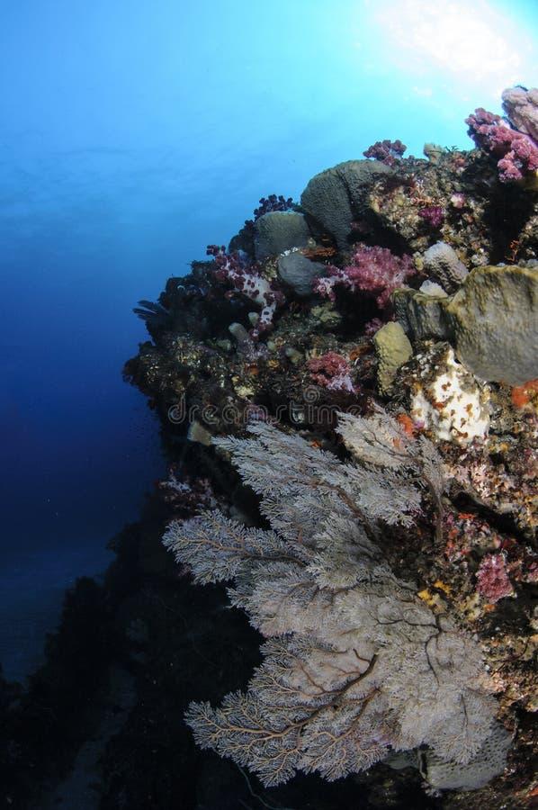 Mooie en Weelderige Coral Reefs van Chiba, Japan stock foto