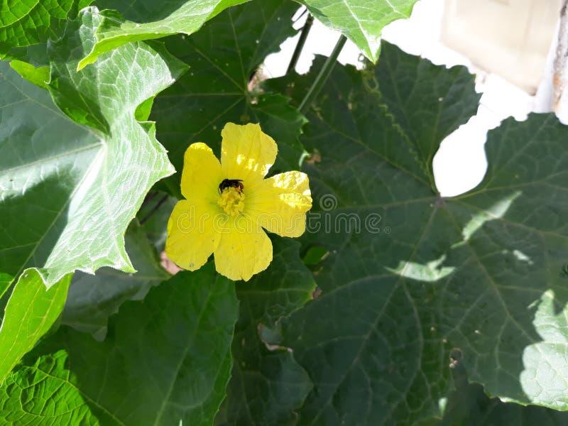 Mooie en weinig bloem en pompoenkever royalty-vrije stock foto