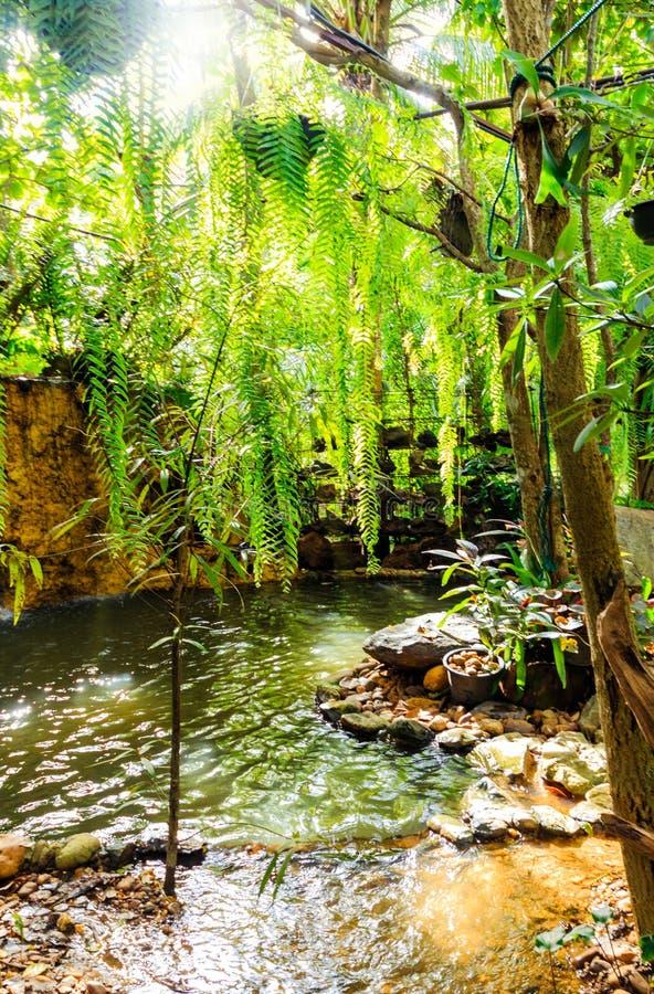 mooie en winderige tuin in koffiewinkel royalty-vrije stock foto's