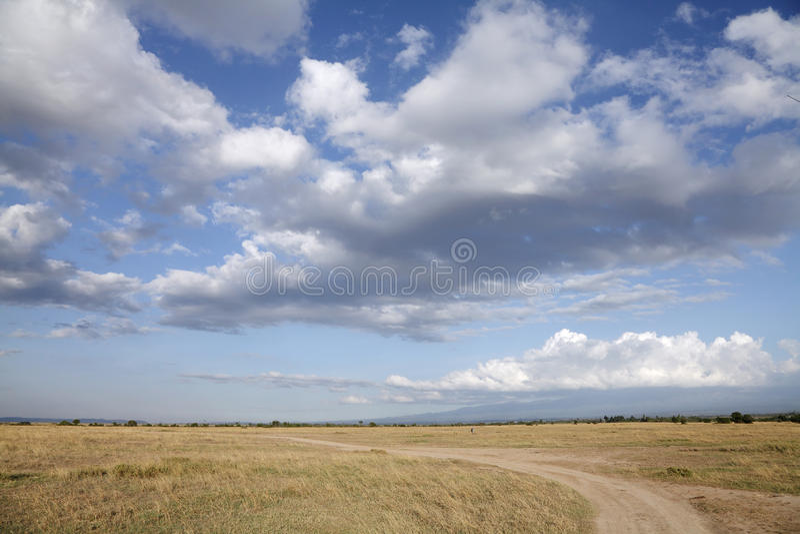 Mooie enorme Savanneweide in Masai Mara stock afbeelding