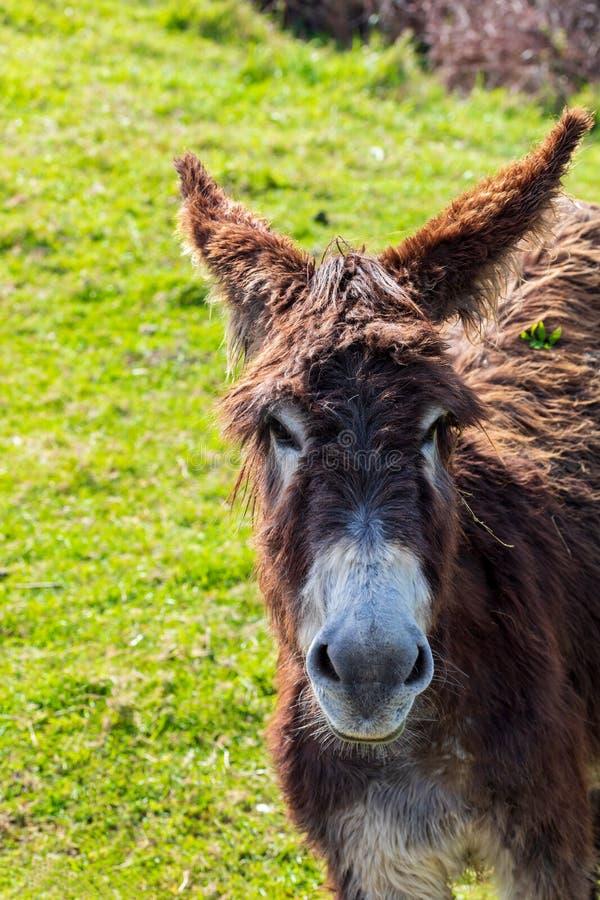 Mooie ezel op zonnige dag Close-up royalty-vrije stock foto's