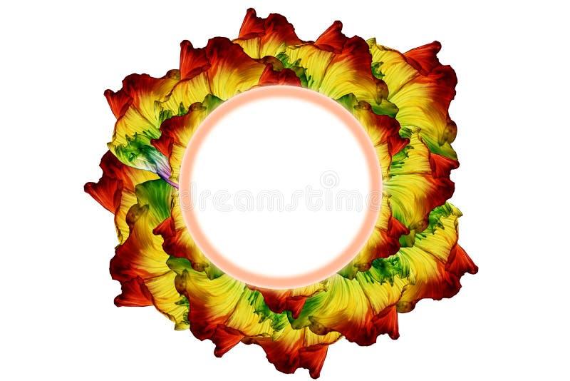 Mooie fantail van bettavissen bloem royalty-vrije stock fotografie