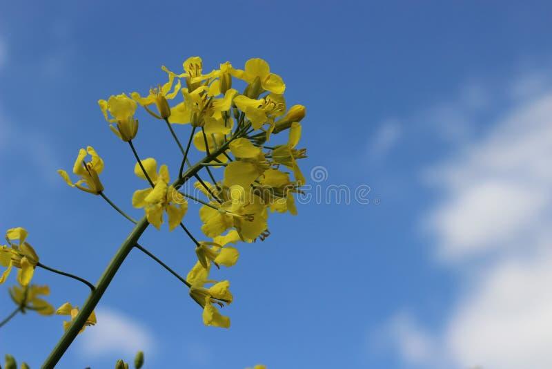 Mooie geel royalty-vrije stock fotografie