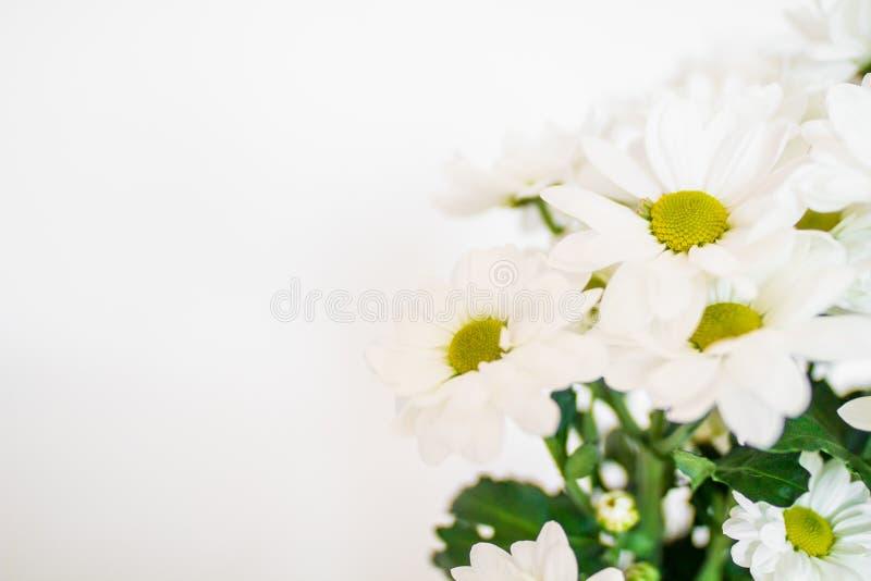Mooie geel en witte bloementulpen royalty-vrije stock afbeeldingen