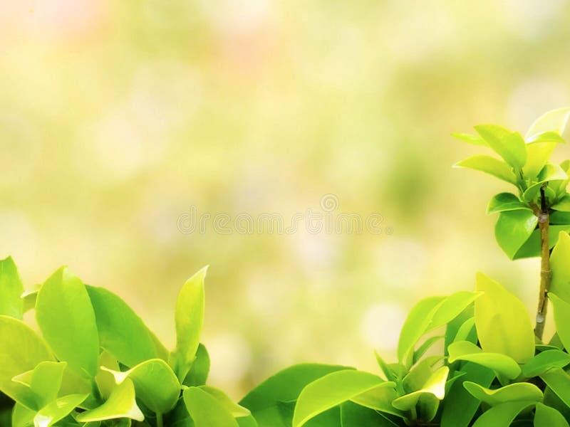 Mooie geelachtige groene natuurlijke bladeren met achtergrond van aard de lichte bokeh royalty-vrije stock foto