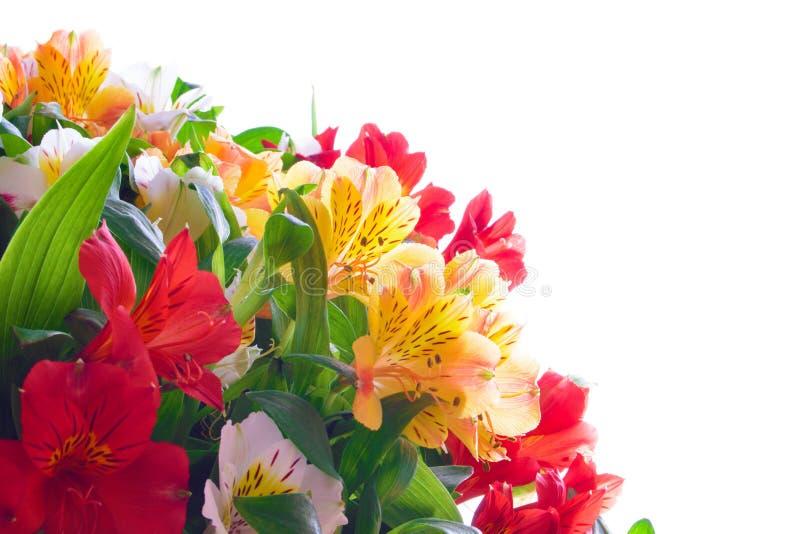 Mooie Gekleurde Bloemen op de Witte Achtergrond royalty-vrije stock afbeeldingen