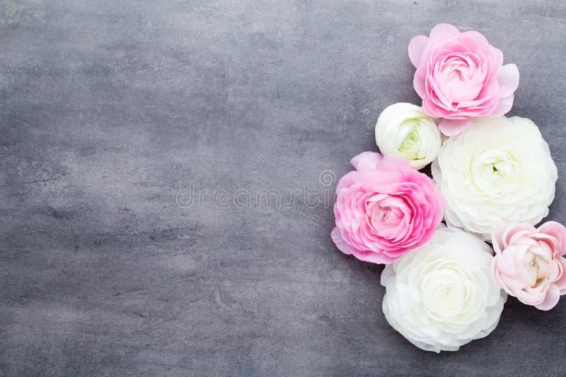 Mooie gekleurde ranunculus bloemen op een grijze achtergrond stock foto's