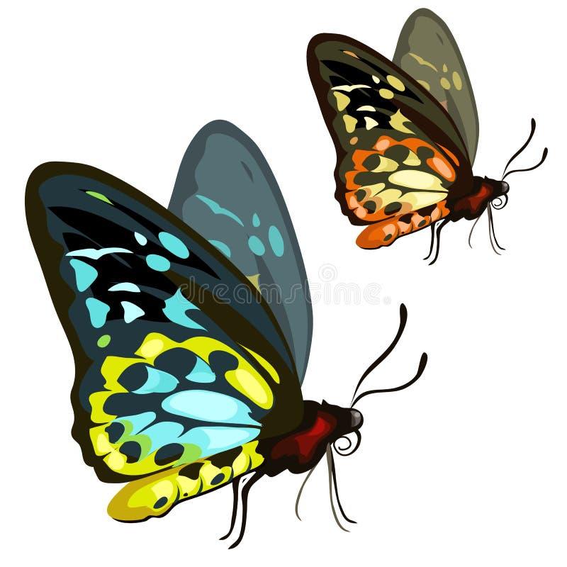 Mooie gekleurde tropische vlinder insect stock illustratie