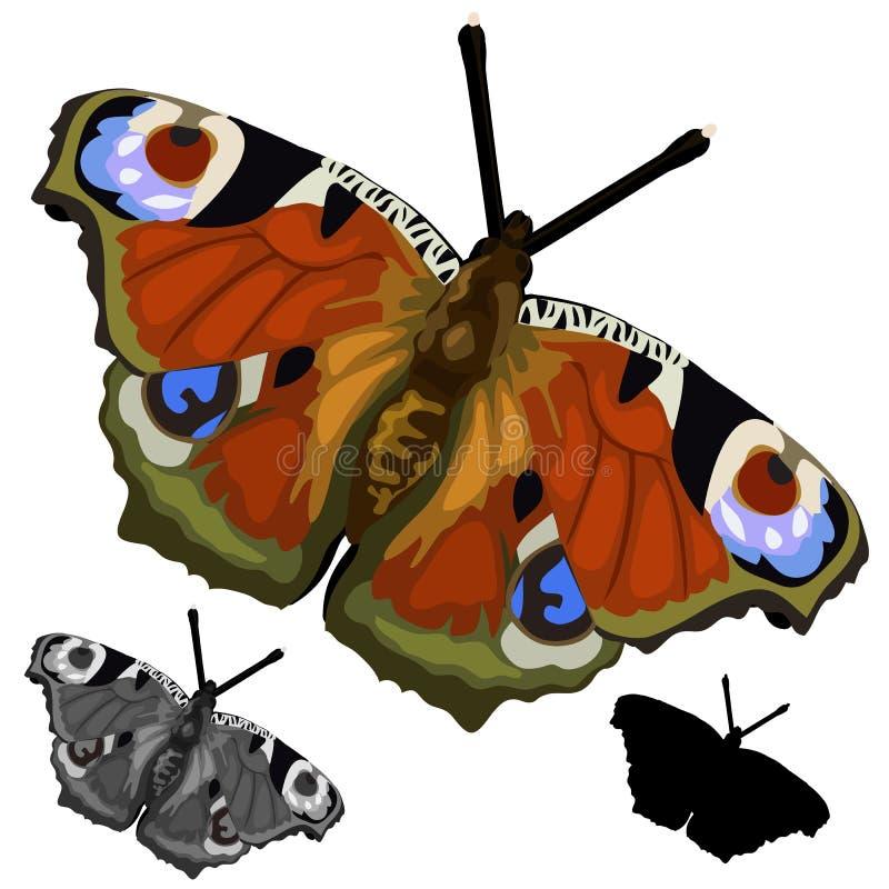 Mooie gekleurde vlinder Geïsoleerde vector stock illustratie